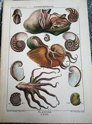 French Antique vintage shell print wall art beach house octopus coastal living