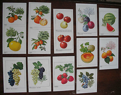 Fruit Illustration Cut-outs from Old Book