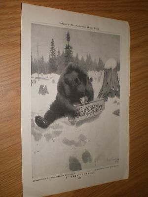 Vintage 1907 Cream Of Wheat A Bear Chance Print/Ad By Philip Goodwin