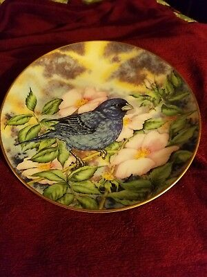 Indigo Bunting Songbirds of the South by Southern Living Gallery #11211