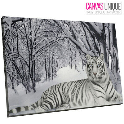 A047 white winter bengal tiger Animal Canvas Wall Art Framed Picture Print
