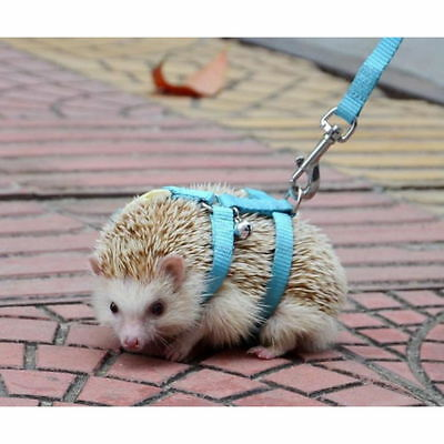 Adjustable Pet Hedgehog Harness Training Playing Traction Rope Lead Walking