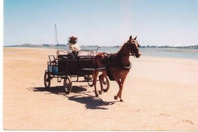 Seven seater Horse Cariage