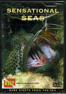Sensational Seas Rare Sights from the Sea DVD Book NEW  A