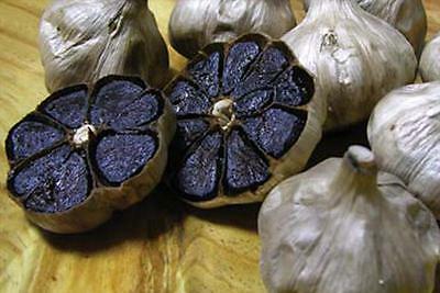Black garlic - Ajo  Negro  , 20 seeds - semillas