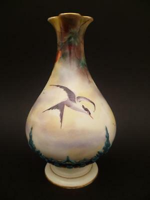 Very Rare Royal Worcester Hadley Common Tern Bird Decorated Vase Dated 1905-1906