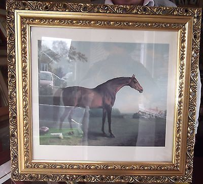 Thoroughbred Racehorse vintage horseracing print in heavy gold frame