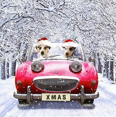 Austin Healey Sprite MK1 Small Christmas Card Sparkle finish driven by Terrier ?