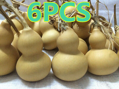 6pcs Natural Gourds Small Calabash Gourd Plant Little Gourd DIY Mascot