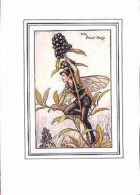 Flower Fairy print.1923.Botanical.Privet.Floral.Cicely Mary Barker.Antique
