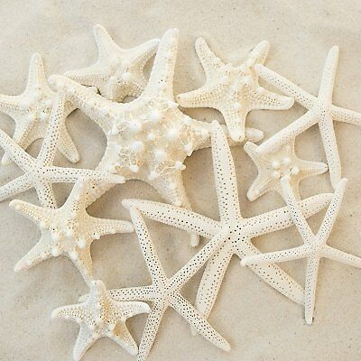 Set of 12 Mixed White Starfish – Sizes Range From 2 to 3.5 inches to 4 to 5.5 –