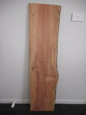 1 x Tasmanian Myrtle Slab - Craft - Wood