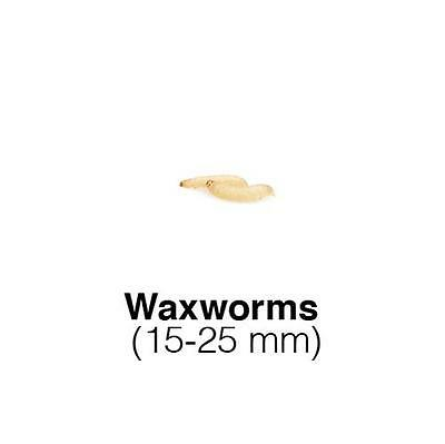 Waxworms 1 tub of 15g (50) Live Waxworms Reptile Foods Treat for Birds
