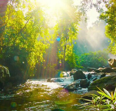 Peaceful Creek & Nature sounds for Deep Relaxation - CD - Narellan Hypnotherapy