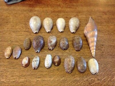 Antique Sea Shell Collection 19 Items