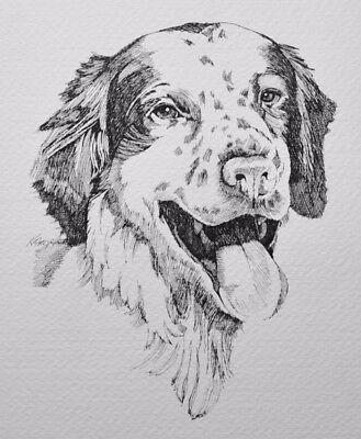 PEN AND INK DRAWING-Brittany Spaniel Portrait