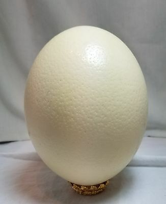 Jumbo Ostrich Egg Blown Eggshell Circumference Measure 18 1/8inx16 1/8in