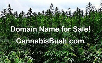 Domain Name for Sale Cannabis Bush COM Hemp Seeds Marijuana Plant Weed Hashish