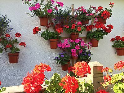 """6 Plant pot holders,hangers,rings.HANG PLANTS on a TRELLIS or Pallet for 5"""" pots"""