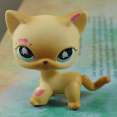 "LPS COLLECTION Action Figure #816 Muddy Brown CAT KITTY TOY 2"" LITTLEST PET SHOP"