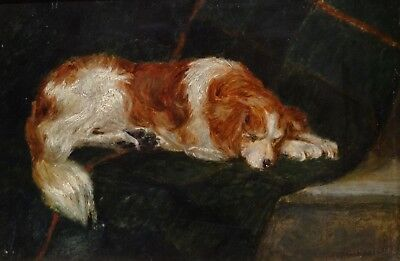 Fine Early 20th Century Spaniel Dog Sleeping Portrait Antique Oil Painting
