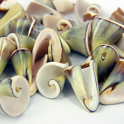 25 x Drilled Gorgeous Craft Shells Seashells for craft & Beads Jewellery SH1