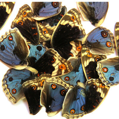 20 REAL BUTTERFLY wing jewelry artwork material ooak DIY gift #39