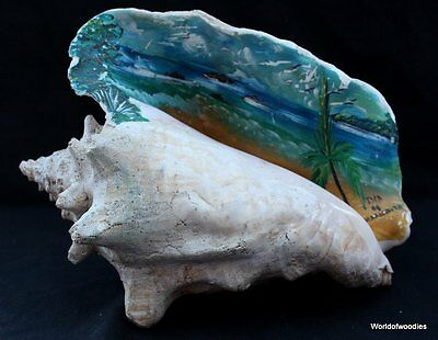 LARGE 25 cm DECORATED CONCH SHELL FROM VENEZUELA