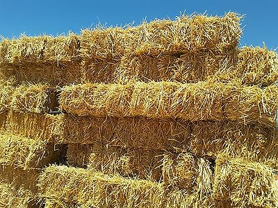 Hay wheaten, Awnless, weed free IN THE SHED