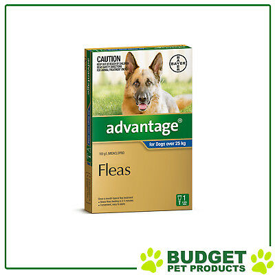 Advantage For Dogs Over 25Kg Single Dose