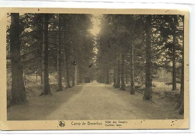 1 old postcard Camp Beverloo zuchtenlaan