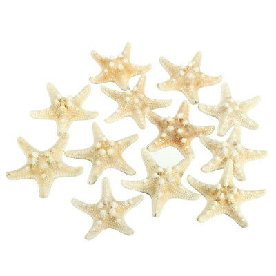 12 x White Knobby Starfish 5cm -7cm Sea Star Shell Beach Wedding Display Cr M5K2