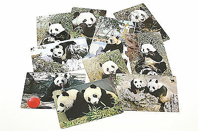 Postcards, Panda Bears, Peking Zoo, China, Set of 8, Vintage in Pack