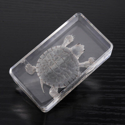 Farmed Amber Turtle Specimen in Clear Lucite Decoration Educational Instrument