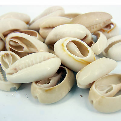25 x Half Cowrie Craft Shells Seashells for craft & Beads jewellery SH7