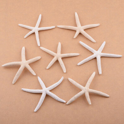12pcs 5-10cm Natural White Pencil Finger Starfish Sea Star Wedding Craft Decor