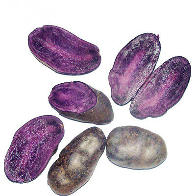 Rare Vegetable - Sweet PURPLE Potato Bonsai 100 seeds