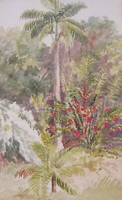 EARLY 20th CENTURY, Watercolour, PALM TREE, BARBADOS, circa 1910