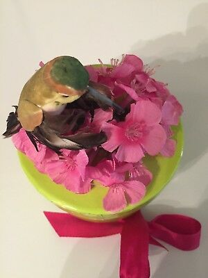 Little Box with Hummingbird and Flowers on Top with Flower Seeds Inside Attract