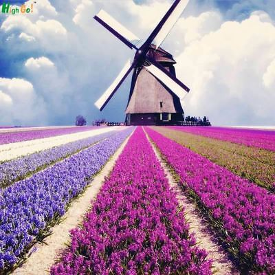French Provence Lavender Seeds,Very Fragrant Organic,Plant Flower Seeds Home Gar