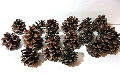 VTG (17) Real Black Forest Pine Cones Christmas Decorations Garlands & Wreaths