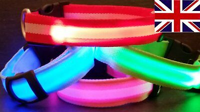 BRIGHT LED Flashing USB RECHARGEABLE LIGHT UP Luminous Adjustable Dog Collar UK