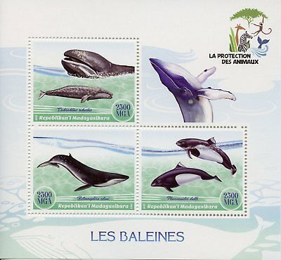 Madagascar 2017 MNH Whales 3v M/S Baleines Whale Marine Animals Stamps