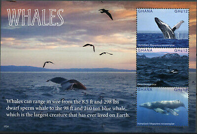 Ghana 2017 MNH Whales Humpback Whale Orca 3v M/S Marine Animals Stamps