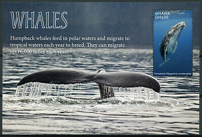 Ghana 2017 MNH Whales Humpback Whale 1v S/S Marine Animals Stamps