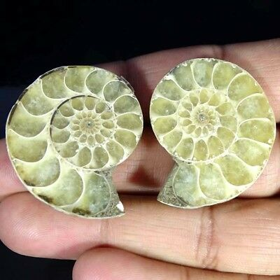 119.60Cts. NATURAL AMMONITE FOSSIL DESIGNER MATCH PAIR FANCY SHAPE GEMSTONE
