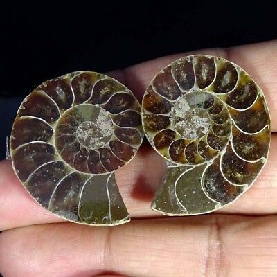 95.00Cts. NATURAL AMMONITE FOSSIL DESIGNER MATCH PAIR FANCY SHAPE GEMSTONE