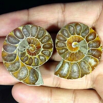 112.40Cts. NATURAL AMMONITE FOSSIL DESIGNER MATCH PAIR FANCY SHAPE GEMSTONE