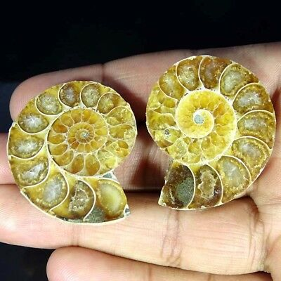 118.20Cts. 100% Natural Ammonite Fossil Nice Matched Cabochon Pair Gemstone