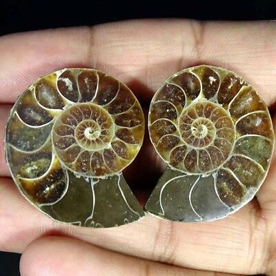 102.00Cts. NATURAL AMMONITE FOSSIL DESIGNER MATCH PAIR FANCY SHAPE GEMSTONE